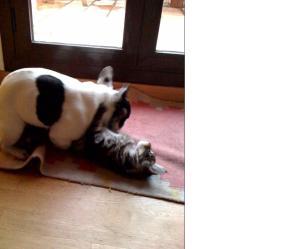 se llevan como el perro y el gato!
